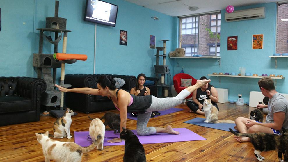 Hacer yoga con gatos es una gran experiencia