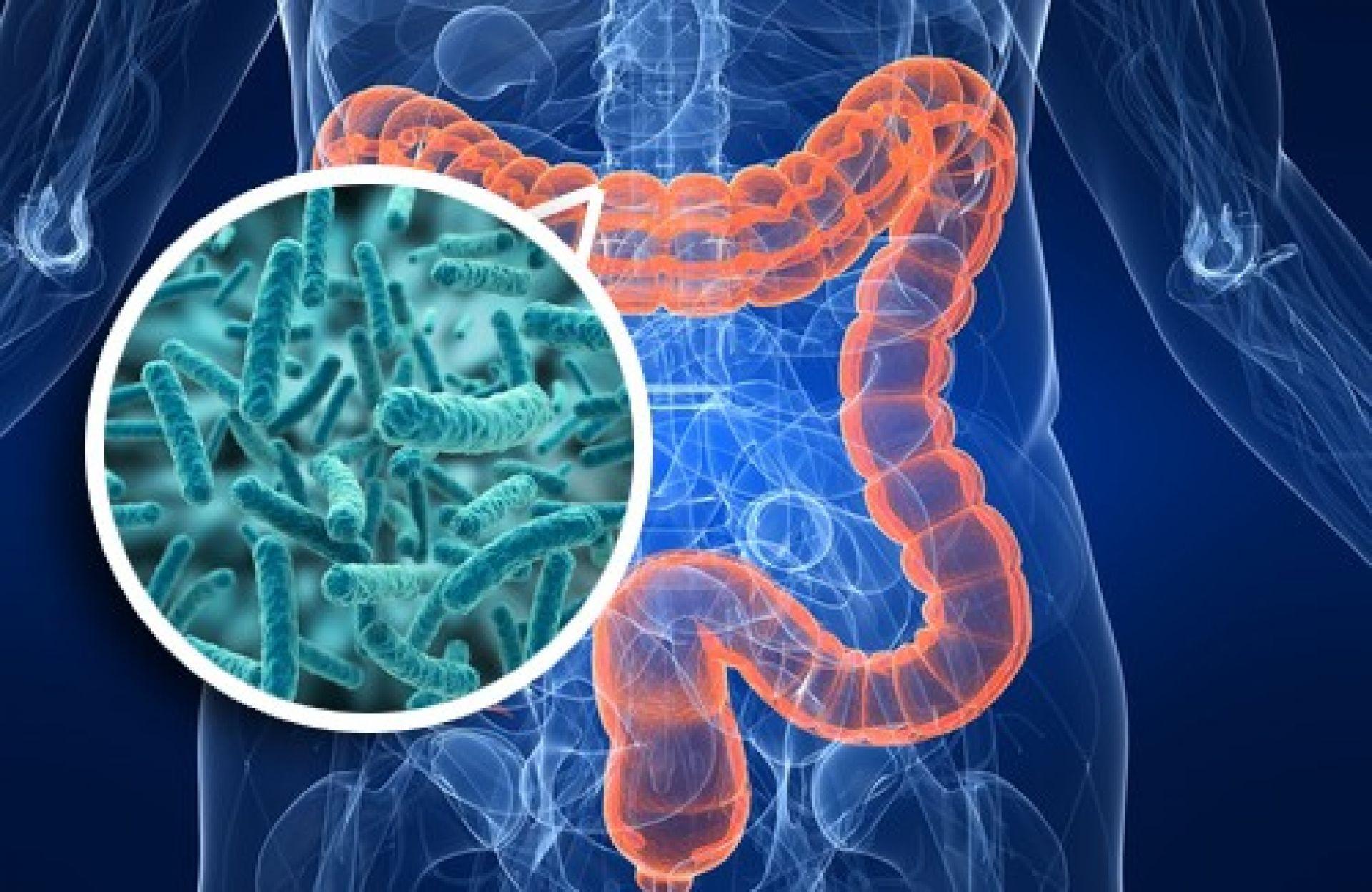 bacterias heces