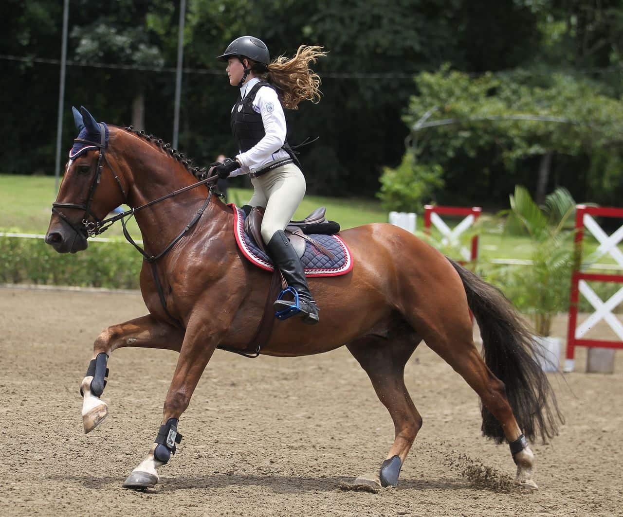 Equitacion2