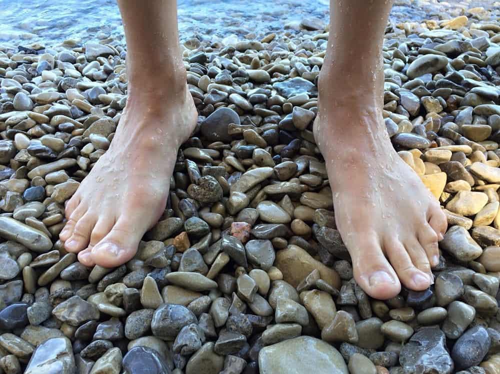 estructura de los pies