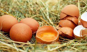 Los huevos no son perjudiciales para la salud ¡Nos engañaron!