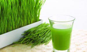 La hierba de trigo, un alimento cada vez más usado por deportistas