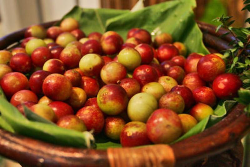 camu-camu fruta