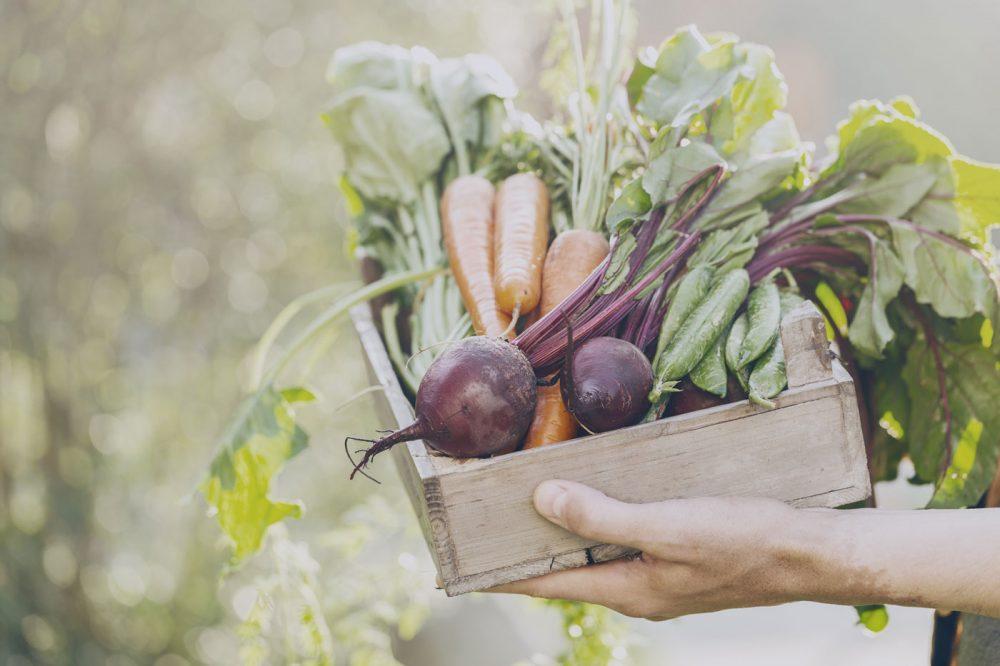fruta y verdura ecológica en tu dieta