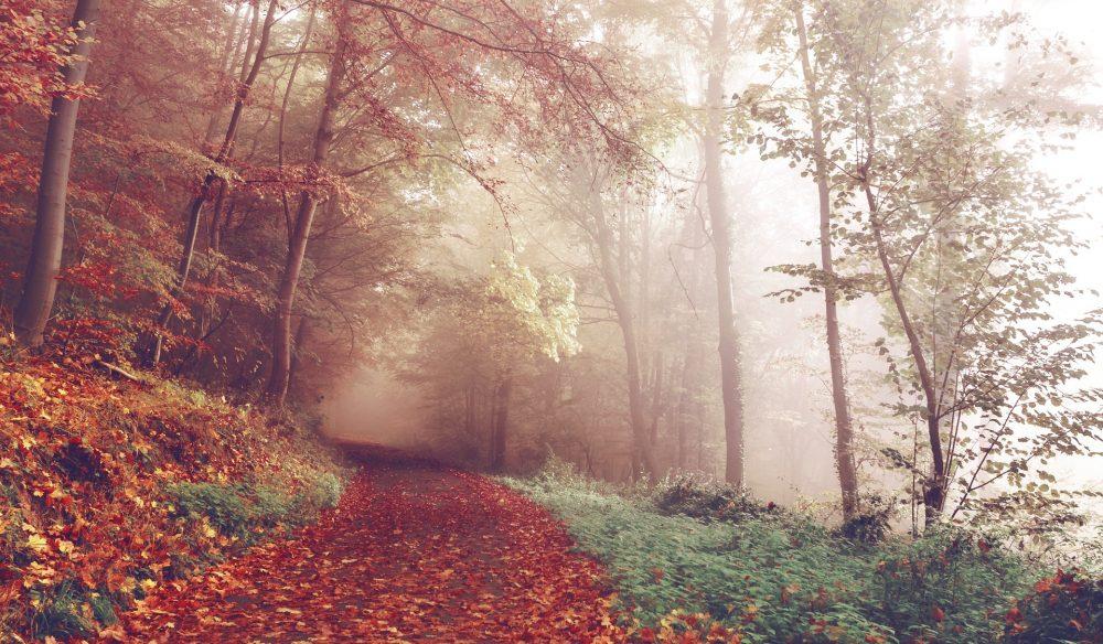 Rutas para practicar senderismo en otoño