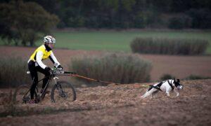 Bikejoring: un deporte para hacer con tu perro que te sorprenderá