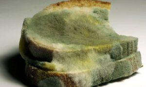 Cómo de peligroso es el moho de los alimentos ¿Basta con limpiarlo?